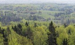 За сутки спасатели нашли пять человек, которые заблудились в лесу