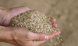 'Dobeles dzirnavnieks' investēs miljonus graudu uzglabāšanas torņos