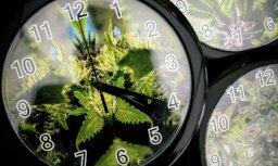 Канада второй в мире полностью легализовала марихуану. Что это значит?