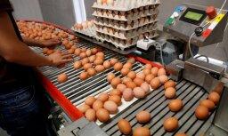 Как зараженные фипронилом яйца попали в европейские магазины