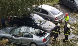 ФОТО: В Плявниеках дерево упало на пять припаркованных машин
