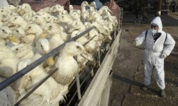 Eiropā izplatās putnu gripa; PVD mājputnu turētājus mudina ievērot biodrošību