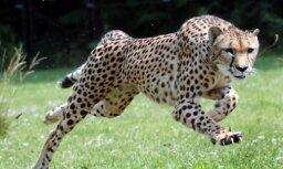 Биологи выяснили, как размеры животного влияют на скорость