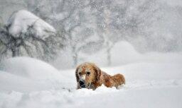 Svētdien debesis brīžiem skaidrosies; dažviet nedaudz snigs