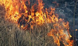 За сутки в Латвии произошло 30 лесных пожаров