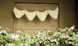 Шашлык, куры, огород: что можно и чего нельзя делать на балконе