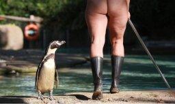 Pliki dupši iedvesmai gozējas zoodārzā