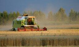 Засуха и насекомые вредители — причина того, что качество зерна в Латвии в этом году будет ниже