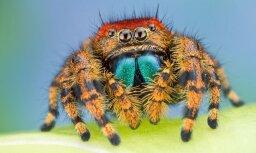 Пауки убивают свыше 400 млн тонн животных в год