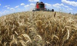 LLU pētījums: Nākotnē kviešu platības pieaugs, bet rudzu un miežu – samazināsies