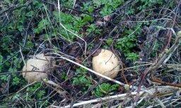 Lasītājs jautā: Dārzā atrasts dīvains objekts. Kas tas ir?