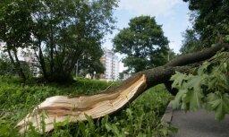 Rīgā koks uzkritis vīrietim un sievietei
