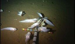 Ученые сняли на ВИДЕО самую глубоководную на планете рыбу