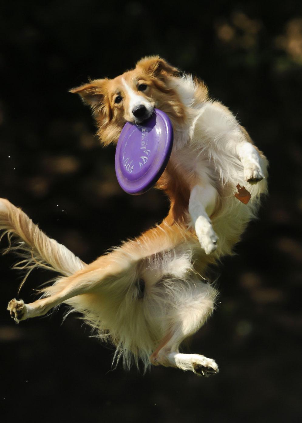 собака ловит