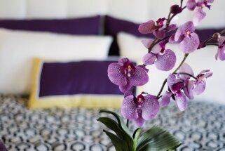 Deviņi ierosinājumi, kā guļamistabā ieviest mājīgumu