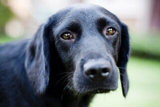 Piecas suņu veselības problēmas, par kurām saimnieki visbiežāk neliekas ne zinis
