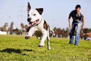 Dobeles novadā notiks aktraktīvs suņu izturības skrējiens