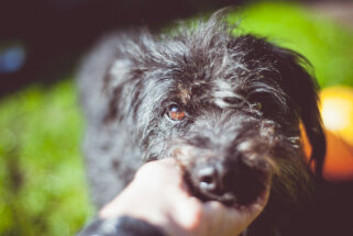 Meklē mājas 'pozitīvisma iemiesotājam' – mīļam suņukam Džodžo