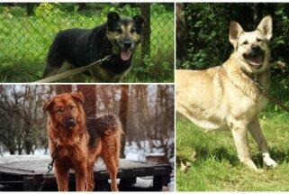 Mīlulis meklē mājas: trīs draiski sunīši, kuru skatiens alkst mīlestību