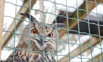 Ieeja citā pasaulē – kā ziemo Rīgas zoo dzīvnieki?