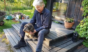 Между собой — по-фински, с собакой — по-шведски. Как охраняют финский язык в Швеции и шведский в Финляндии