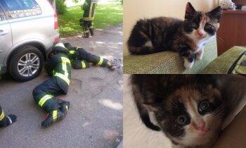 'Ačteles lūdzās, lai palīdz' – ugunsdzēsēji Rīgā izglābj automašīnas ritenī iesprūdušu kaķenīti