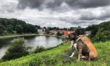 Talsi – suņiem draudzīgākais novads Latvijā. Iespējas aizraujošai laika pavadīšanai