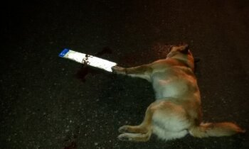 Demenē notriektā suņa lieta: policija soda vadītāju, kurš aizbēga