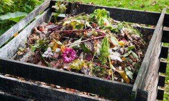 Dārznieka draugs komposts: kā novērst smakošanu un uzlabot ārējo izskatu
