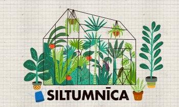 Kā iekārtot ražīgu un ērtu siltumnīcu: augsne, dobes, laistīšanas sistēma