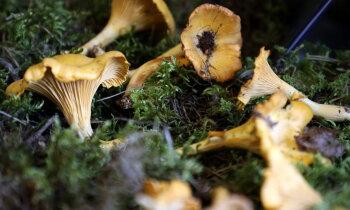 Возможность подзаработать: в этом году — рекордные цены на ягоды и грибы