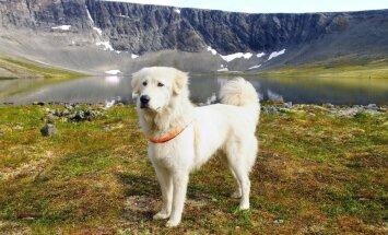 Četrkājainie kalnieši – suņu šķirnes, kuras radušas izdzīvot kilometriem virs jūras līmeņa