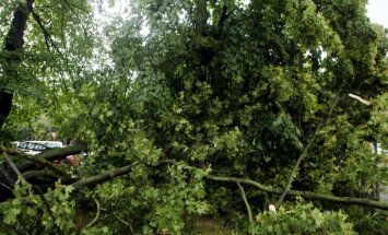 Stiprais negaiss Pierīgā piektdien lauzis daudz koku