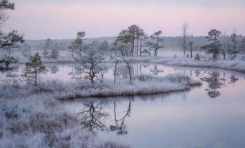 ФОТО: Тронутое первым в этом году морозцем большое Кемерское болото