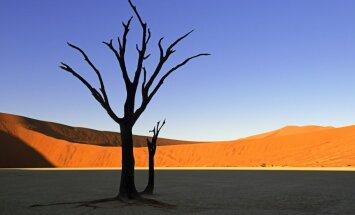 Sirreālisms dabā: tuksnesis, kas izskatās pēc Dalī gleznām