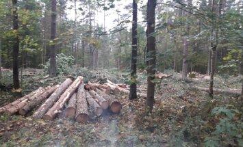 В этом году на территориях Риги восстановят более 400 гектаров леса