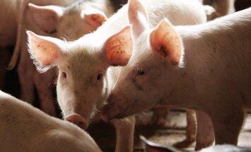 Mēris uzbrūk lielai Lietuvas cūku novietnei; PVD aptur leišu gaļas tirgošanu Latvijā