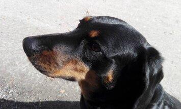 ФОТО: В жилой зоне на глазах у хозяйки мотоциклист насмерть сбил собаку