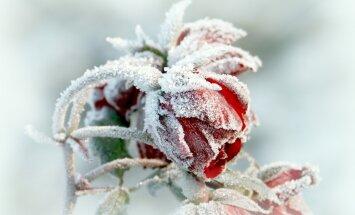 В Видземе и Латгале зафиксировали первые заморозки