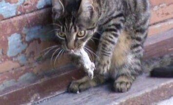 Skarbais Rēzeknes kaķis