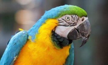 ВИДЕО: Попугай спел сам с собой на два голоса