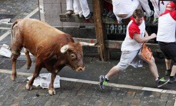 Spānijā vēršu skrējienā buļļi sadūruši trīs cilvēkus