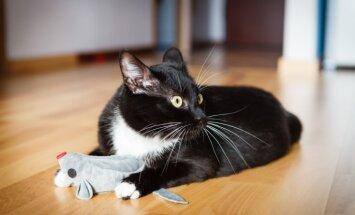 Vai kaķi sirgst ar Toma un Džerija sindromu? Skaidro speciālisti