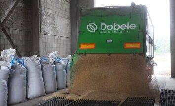 Foto: 'Dobeles dzirnavnieks' uzsāk jaunās graudu ražas pieņemšanu