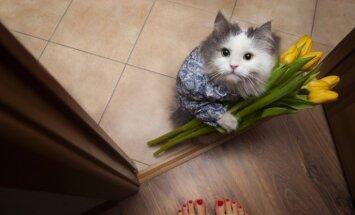 Tīrīgs un mīlīgi murrā: iemesli, kādēļ kaķis ir labāka izvēle nekā vīrietis