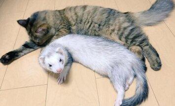 Seši seski adoptējuši kaķi, kurš tagad arī domā, ka ir sesks