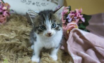 Ar fotoizstādes palīdzību atgādina par ielas kaķu skaudro dzīvi