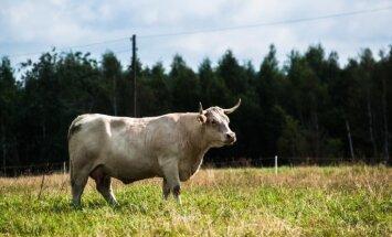 'Zirgi ārā,' bioloģiskā saimniekošana iekšā – EP aktualizē lauksaimniecības statistiku