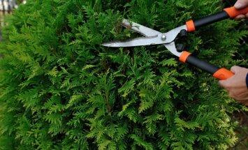 Kas darāms dārzā no 10. līdz 17. jūlijam?