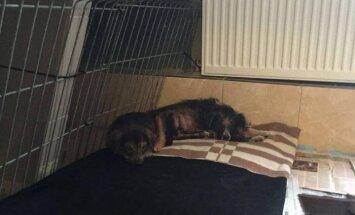 Lūdz palīdzēt novārgušai suņu ģimenītei, kura nonākusi patversmē